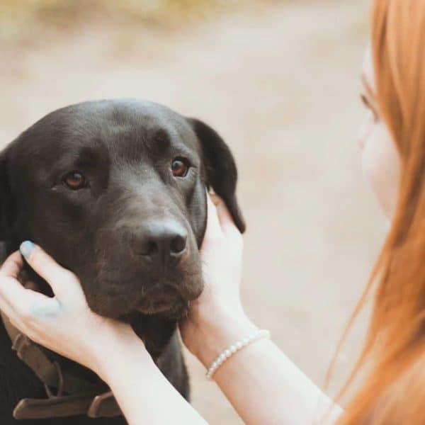 Ihre Welpenschule in Nettetal: Hundeerziehung für Welpen und Hund in meiner Nähe 1